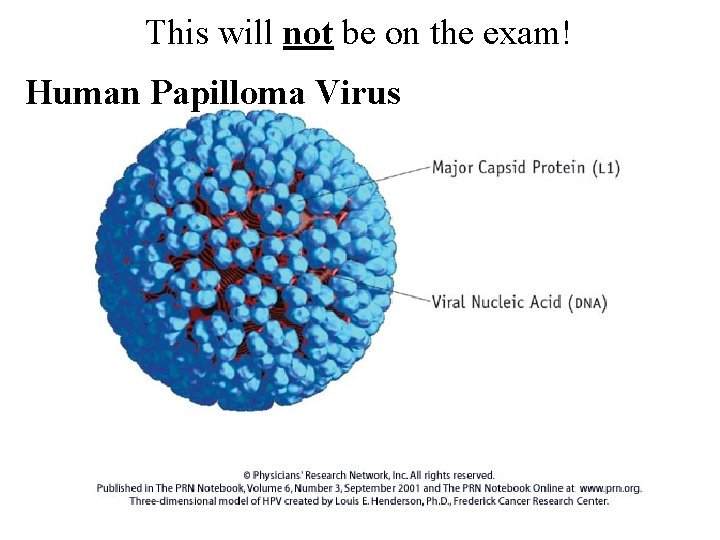 This will not be on the exam! Human Papilloma Virus