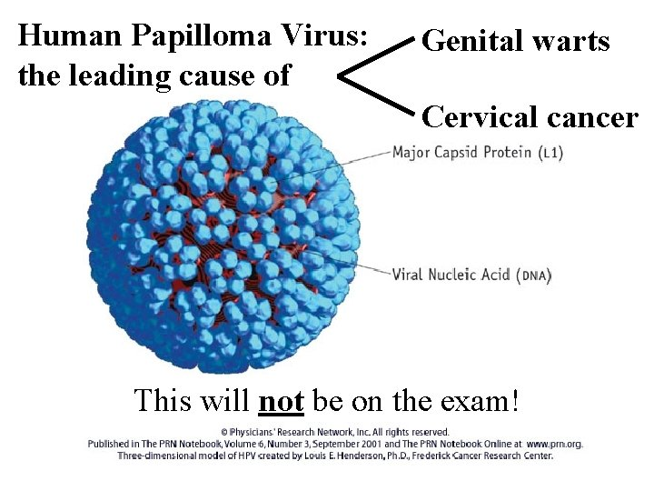 Human Papilloma Virus: the leading cause of Genital warts Cervical cancer This will not