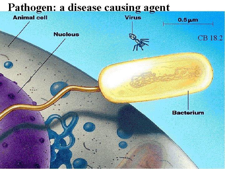 Pathogen: a disease causing agent CB 18. 2