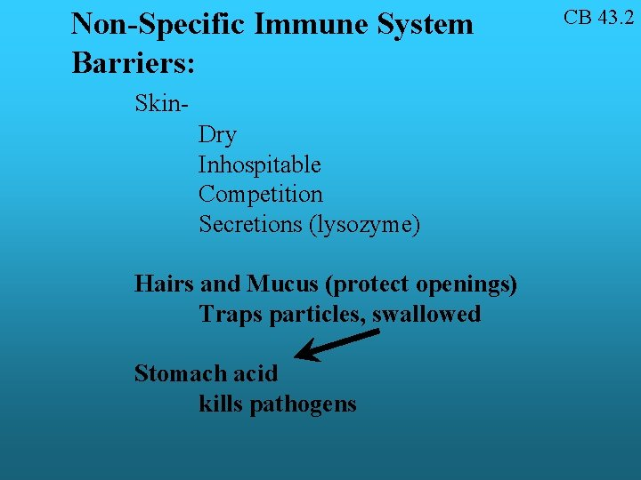 Non-Specific Immune System Barriers: Skin. Dry Inhospitable Competition Secretions (lysozyme) Hairs and Mucus (protect