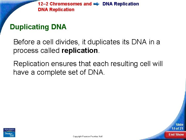 12– 2 Chromosomes and DNA Replication Duplicating DNA Before a cell divides, it duplicates