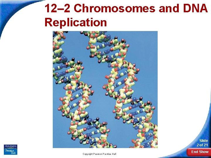 12– 2 Chromosomes and DNA Replication 12 -2 Chromosomes and DNA Replication Slide 2