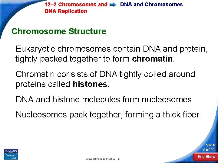 12– 2 Chromosomes and DNA Replication DNA and Chromosomes Chromosome Structure Eukaryotic chromosomes contain