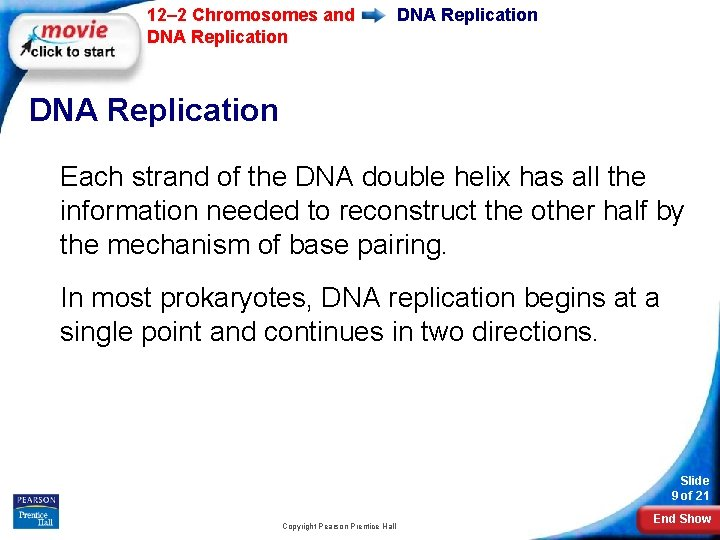 12– 2 Chromosomes and DNA Replication Each strand of the DNA double helix has