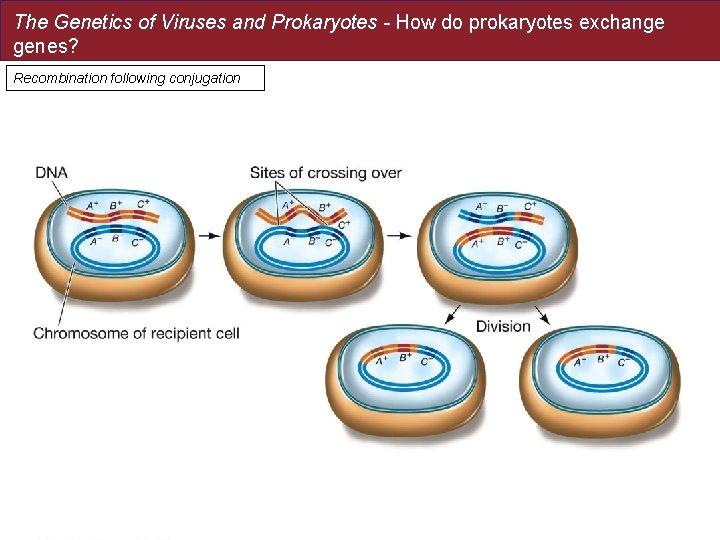 The Genetics of Viruses and Prokaryotes - How do prokaryotes exchange genes? Recombination following