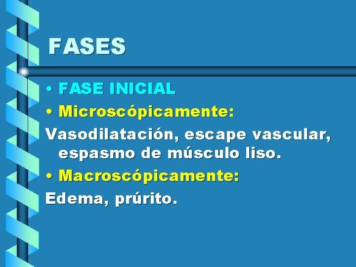 FASES • FASE INICIAL • Microscópicamente: Vasodilatación, escape vascular, espasmo de músculo liso. •