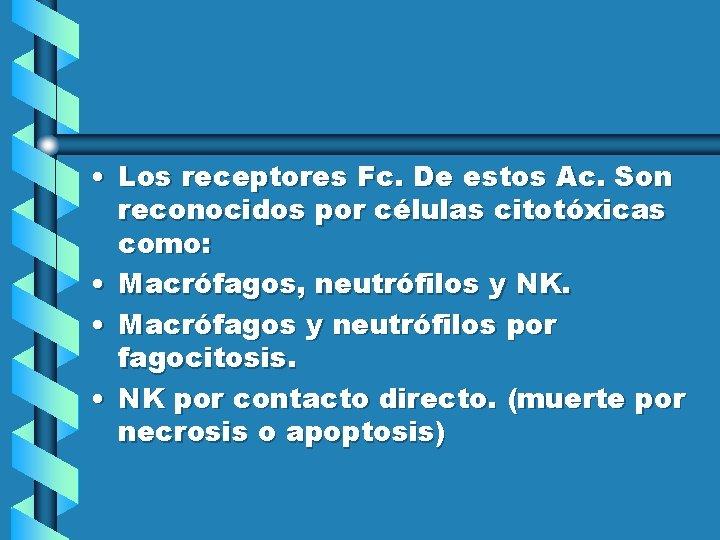 • Los receptores Fc. De estos Ac. Son reconocidos por células citotóxicas como:
