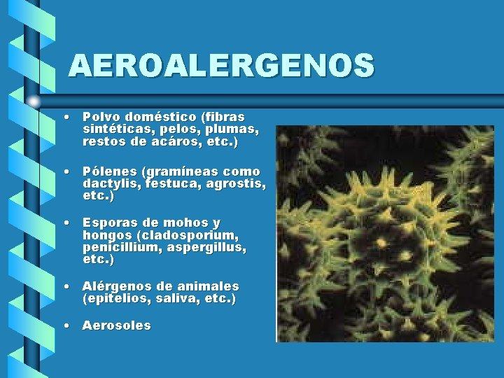 AEROALERGENOS • Polvo doméstico (fibras sintéticas, pelos, plumas, restos de acáros, etc. ) •