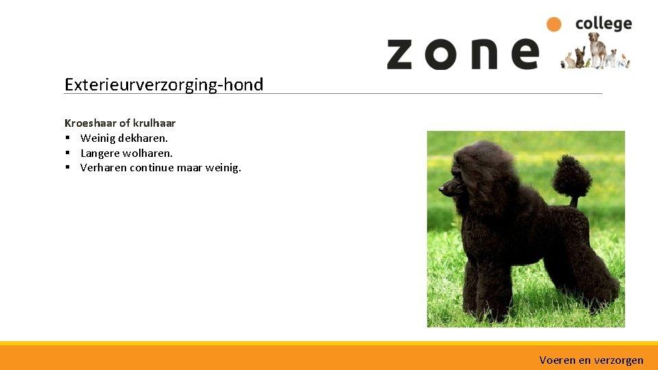 Exterieurverzorging-hond Kroeshaar of krulhaar § Weinig dekharen. § Langere wolharen. § Verharen continue maar