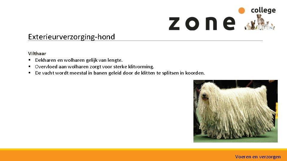 Exterieurverzorging-hond Vilthaar § Dekharen en wolharen gelijk van lengte. § Overvloed aan wolharen zorgt