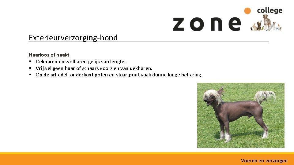 Exterieurverzorging-hond Haarloos of naakt § Dekharen en wolharen gelijk van lengte. § Vrijwel geen