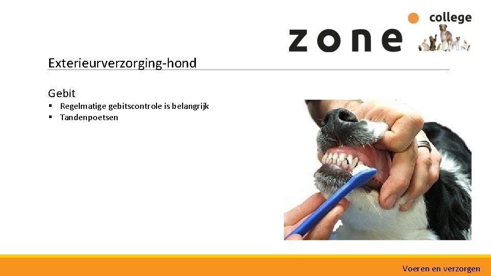 Exterieurverzorging-hond Gebit § Regelmatige gebitscontrole is belangrijk § Tandenpoetsen Voeren en verzorgen