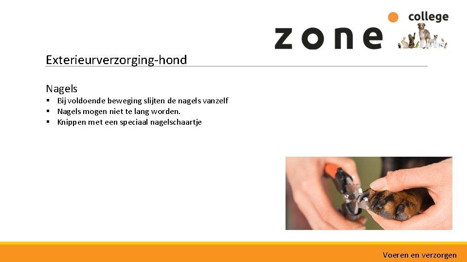 Exterieurverzorging-hond Nagels § Bij voldoende beweging slijten de nagels vanzelf § Nagels mogen niet