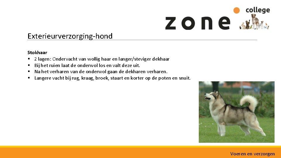 Exterieurverzorging-hond Stokhaar § 2 lagen: Ondervacht van wollig haar en langer/steviger dekhaar § Bij