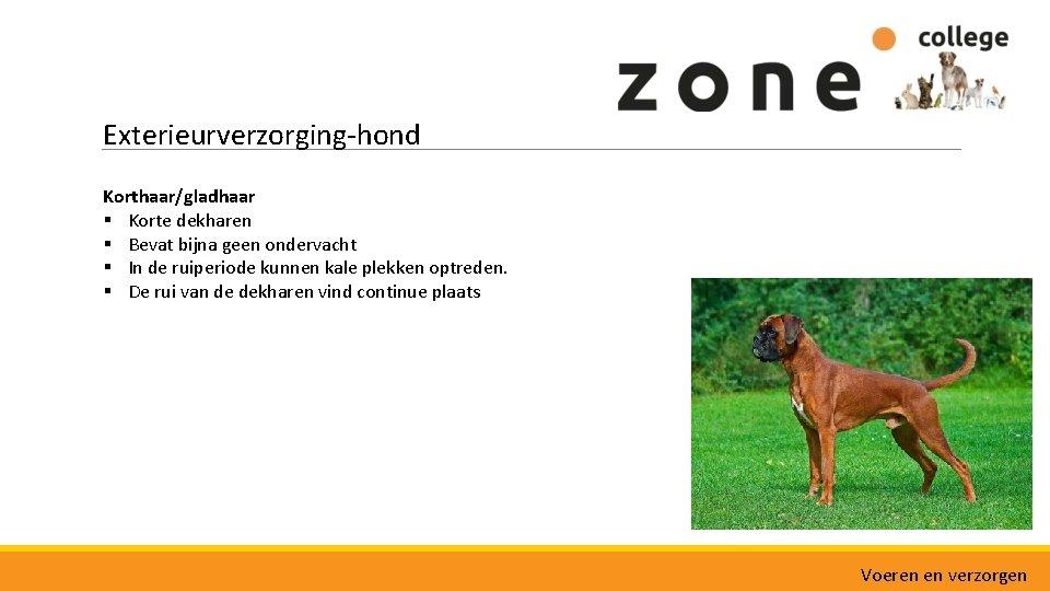 Exterieurverzorging-hond Korthaar/gladhaar § Korte dekharen § Bevat bijna geen ondervacht § In de ruiperiode