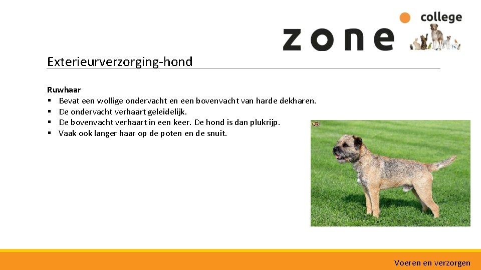 Exterieurverzorging-hond Ruwhaar § Bevat een wollige ondervacht en een bovenvacht van harde dekharen. §