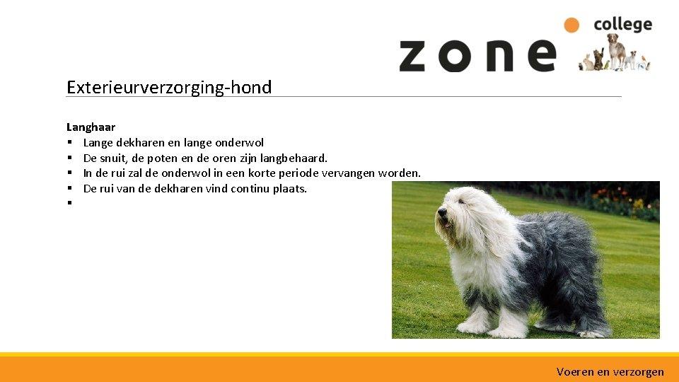 Exterieurverzorging-hond Langhaar § Lange dekharen en lange onderwol § De snuit, de poten en