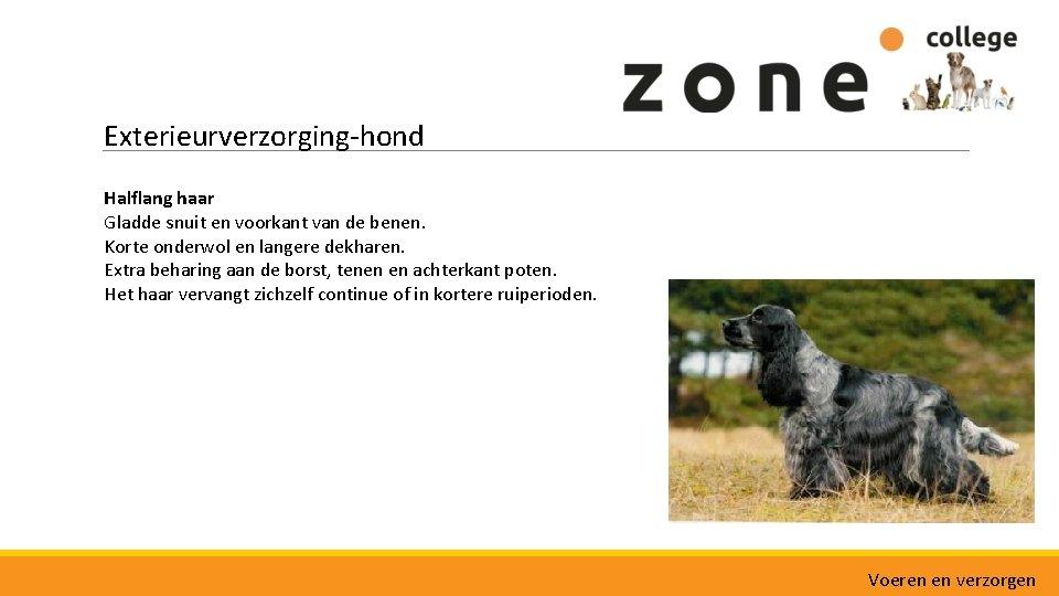 Exterieurverzorging-hond Halflang haar Gladde snuit en voorkant van de benen. Korte onderwol en langere