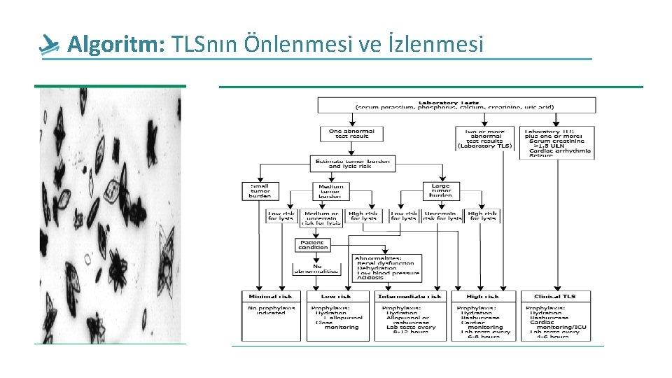 Algoritm: TLSnın Önlenmesi ve İzlenmesi