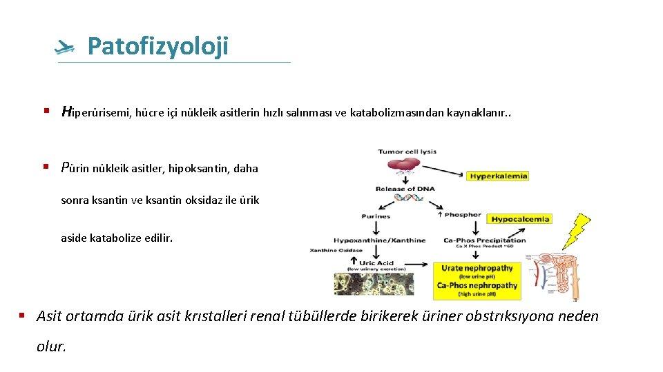 Patofizyoloji Hiperürisemi, hücre içi nükleik asitlerin hızlı salınması ve katabolizmasından kaynaklanır. . Pürin nükleik