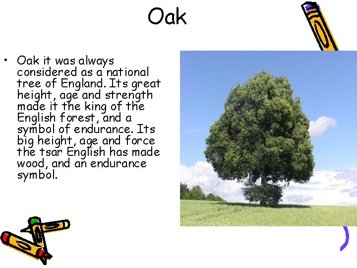 Oak • Oak it was always considered as a national tree of England. Its