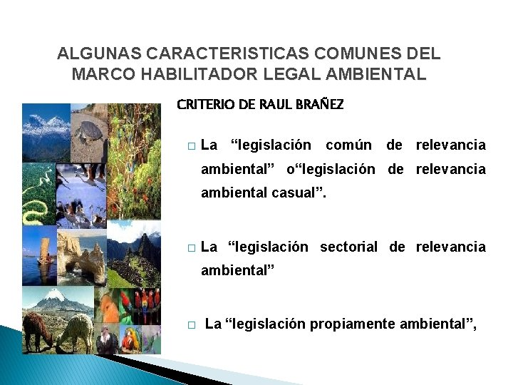 ALGUNAS CARACTERISTICAS COMUNES DEL MARCO HABILITADOR LEGAL AMBIENTAL CRITERIO DE RAUL BRAÑEZ � La
