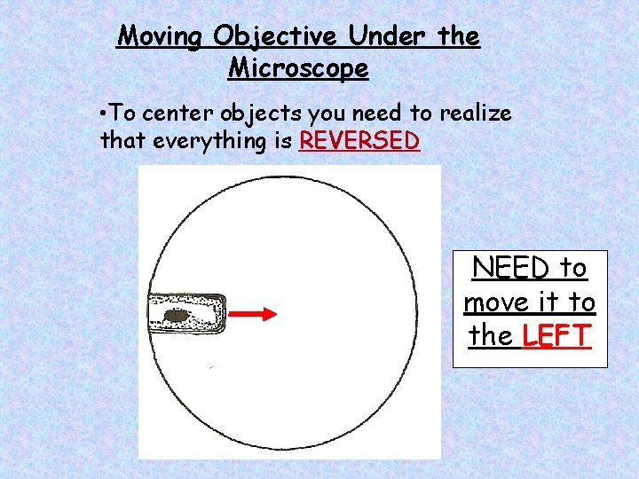 Moving Objective Under the Microscope • To center objects you need to realize that
