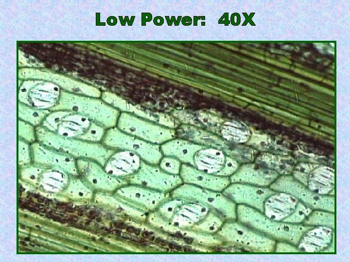 Low Power: 40 X