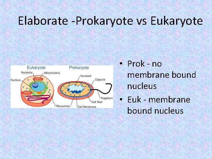 Elaborate -Prokaryote vs Eukaryote • Prok - no membrane bound nucleus • Euk -
