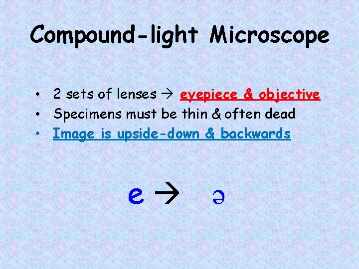 Compound-light Microscope • 2 sets of lenses eyepiece & objective • Specimens must be