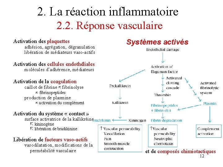 2. La réaction inflammatoire 2. 2. Réponse vasculaire Activation des plaquettes adhésion, agrégation, dégranulation