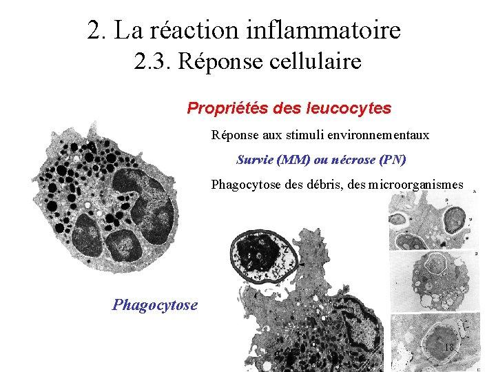 2. La réaction inflammatoire 2. 3. Réponse cellulaire Propriétés des leucocytes Réponse aux stimuli