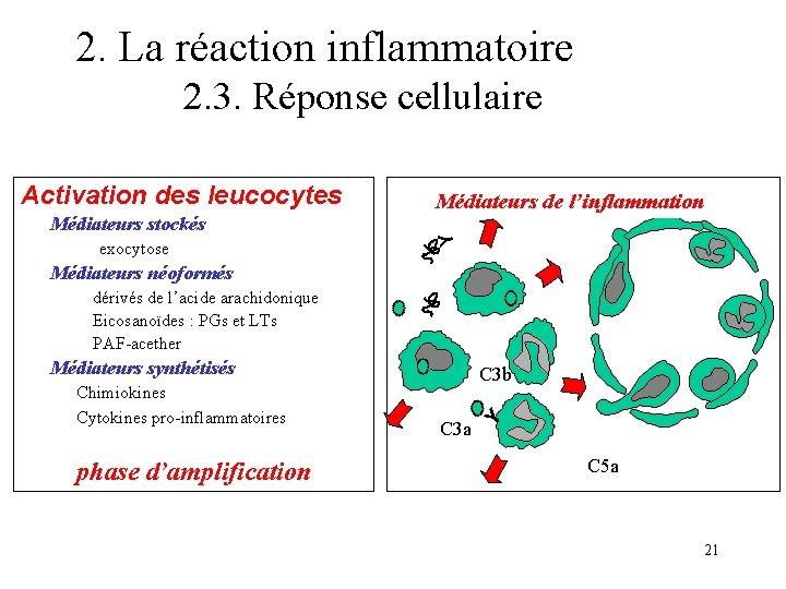 2. La réaction inflammatoire 2. 3. Réponse cellulaire Médiateurs stockés exocytose C 3 a