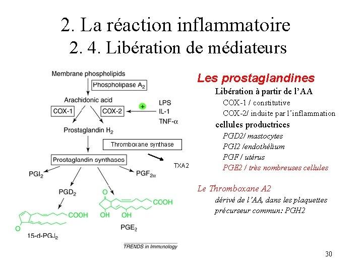 2. La réaction inflammatoire 2. 4. Libération de médiateurs Les prostaglandines Libération à partir