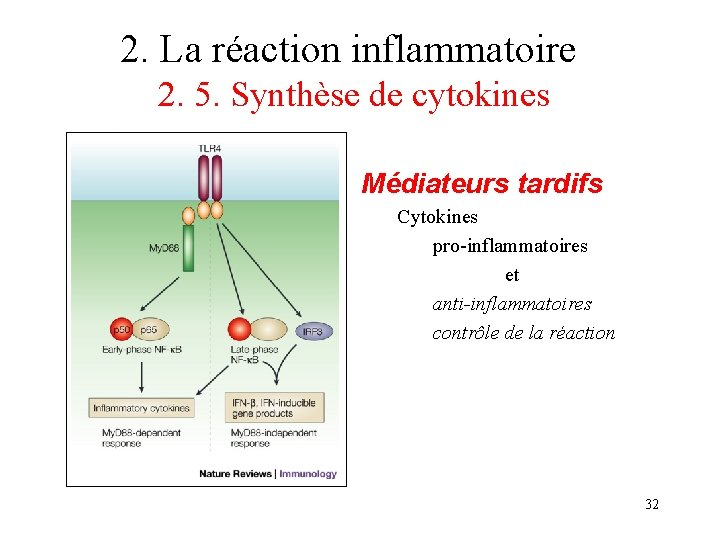 2. La réaction inflammatoire 2. 5. Synthèse de cytokines Médiateurs tardifs Cytokines pro-inflammatoires et