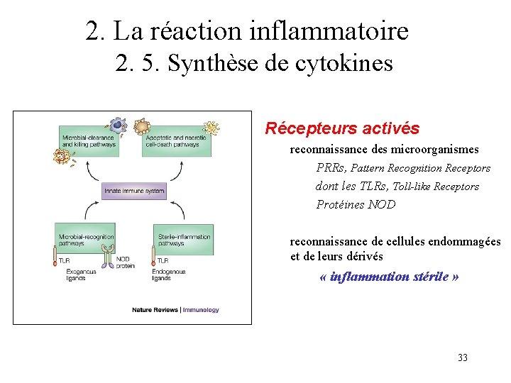 2. La réaction inflammatoire 2. 5. Synthèse de cytokines Récepteurs activés reconnaissance des microorganismes
