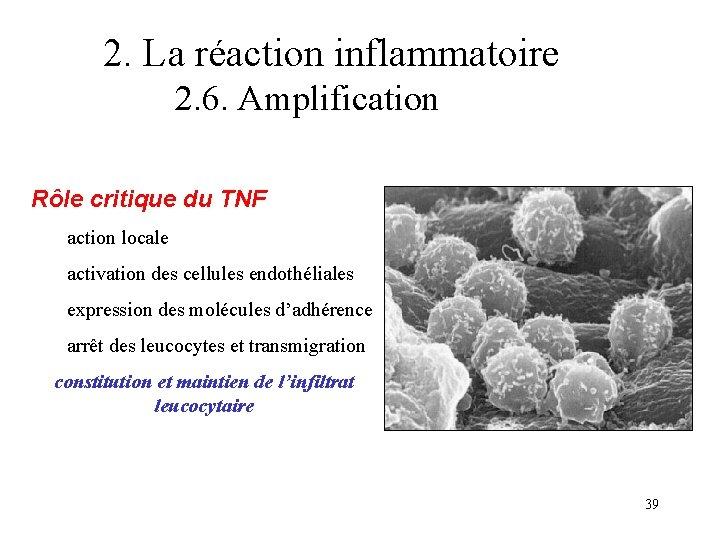 2. La réaction inflammatoire 2. 6. Amplification Rôle critique du TNF action locale activation