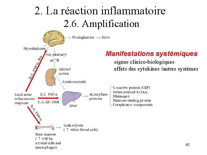2. La réaction inflammatoire 2. 6. Amplification Manifestations systémiques signes clinico-biologiques effets des cytokines