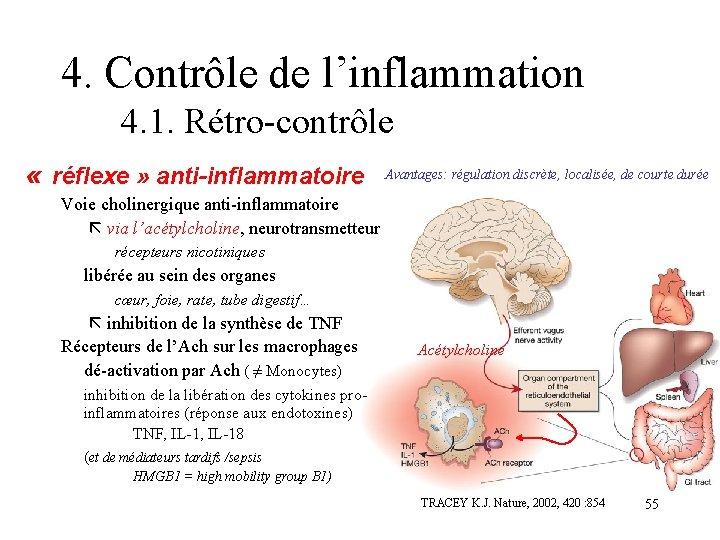 4. Contrôle de l'inflammation 4. 1. Rétro-contrôle « réflexe » anti-inflammatoire Avantages: régulation discrète,