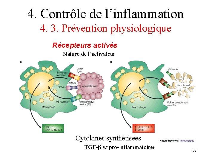 4. Contrôle de l'inflammation 4. 3. Prévention physiologique Récepteurs activés Nature de l'activateur Cytokines