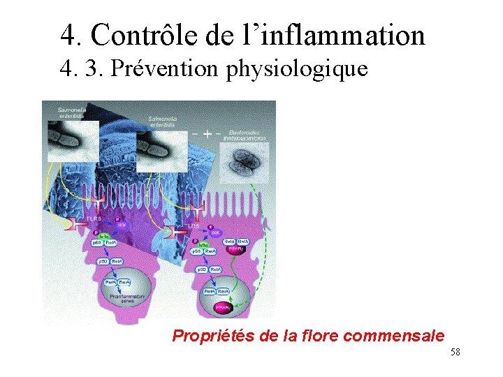 4. Contrôle de l'inflammation 4. 3. Prévention physiologique Propriétés de la flore commensale 58