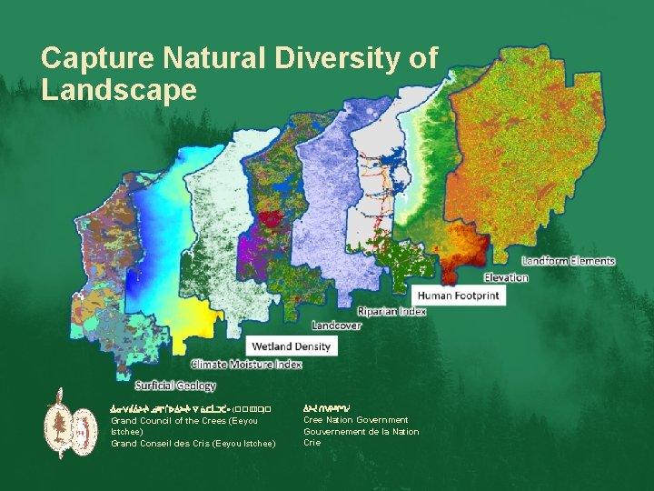 Capture Natural Diversity of Landscape ᐐᓂᐯᑰᐄᔨᔫᒡ ᓅᐦᒋᒦᐅᐄᔨᔫᒡ ᐁ ᓈᑕᒫᑐᑣᐤ (��� ) ᐄᔨᔫ ᑎᐯᔨᐦᒋᒉᓲ Grand