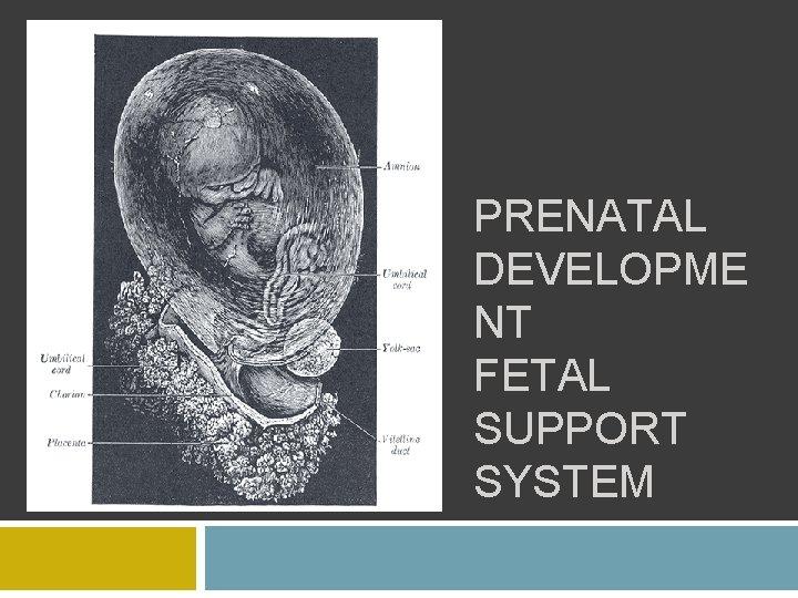PRENATAL DEVELOPME NT FETAL SUPPORT SYSTEM
