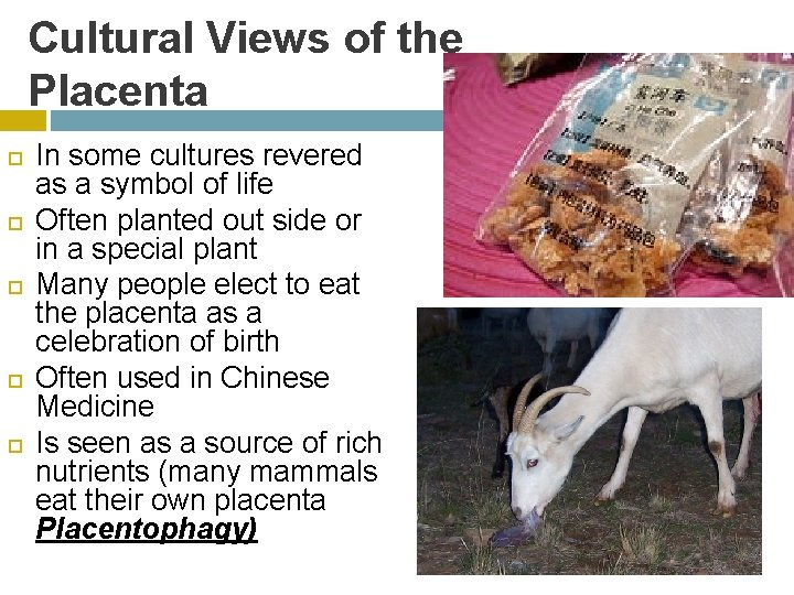 Cultural Views of the Placenta In some cultures revered as a symbol of life