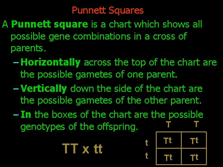 Punnett Squares A Punnett square is a chart which shows all possible gene combinations