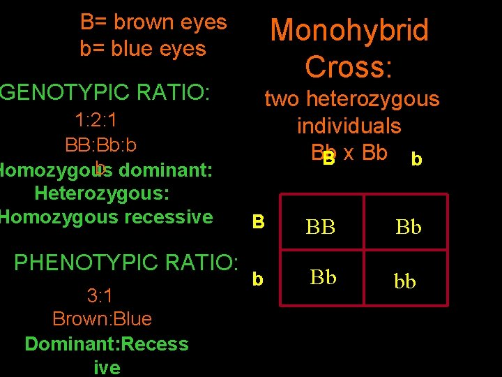 B= brown eyes b= blue eyes GENOTYPIC RATIO: 1: 2: 1 BB: Bb: b