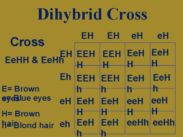 Dihybrid Cross EH EH EH Ee. HH & Ee. Hh H Eh EEH E=