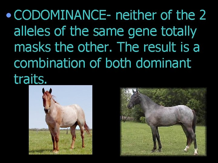 • CODOMINANCE- neither of the 2 alleles of the same gene totally masks