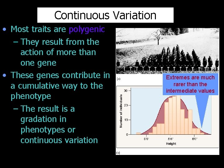 Continuous Variation • Most traits are polygenic – They result from the action of