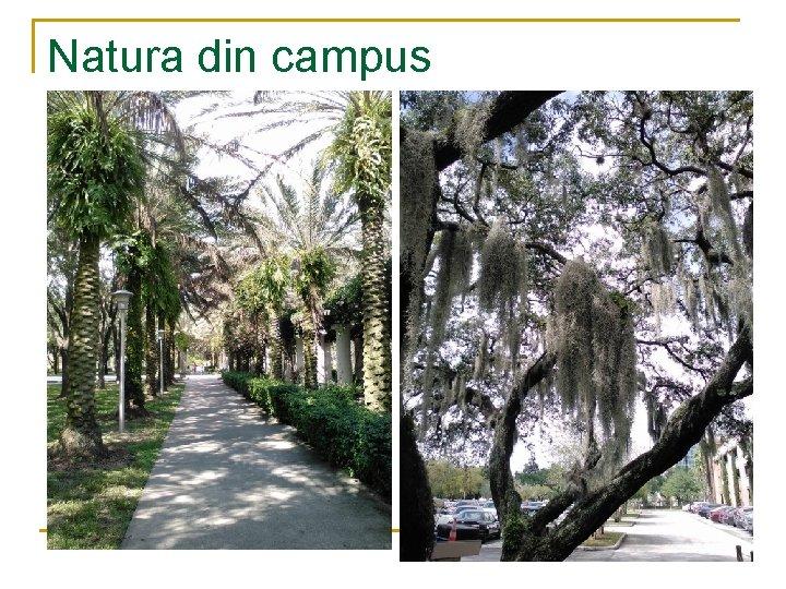 Natura din campus
